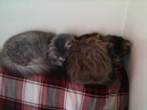 Luna and Rosie